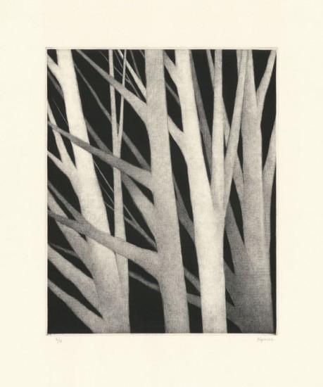 Robert Kipniss - Mezzotints - Four trees leaning