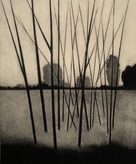 Robert Kipniss - Mezzotints - Leafless saplings