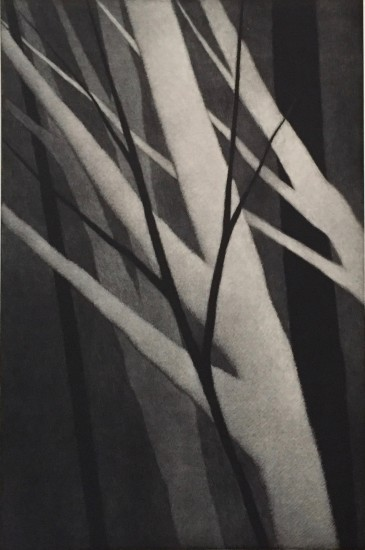 Robert Kipniss - Mezzotints - Six trees