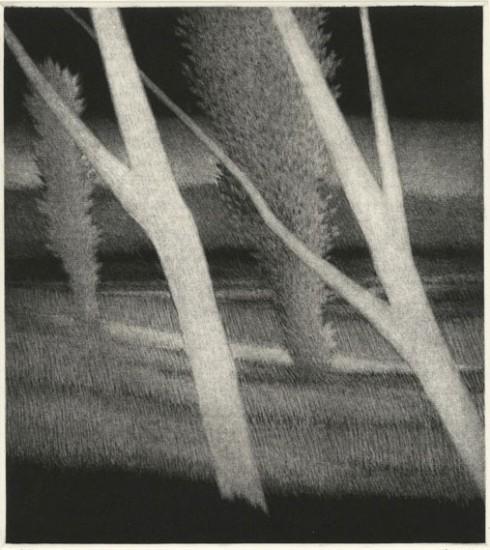 Robert Kipniss - Mezzotints - White trees leaning