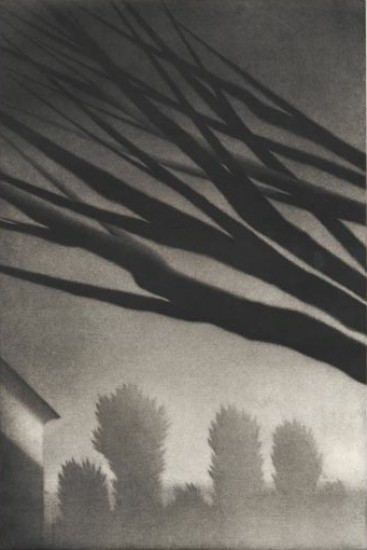 Robert Kipniss - Mezzotints - Branches, Millerton