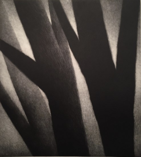 Robert Kipniss - Mezzotints - Trees - forms