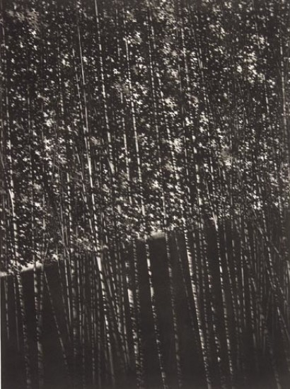 Robert Kipniss - Mezzotints - The white forest