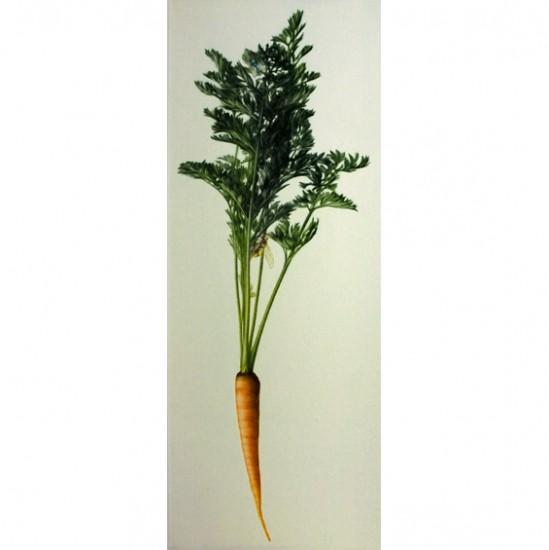 Mikio Watanabe - Une carotte