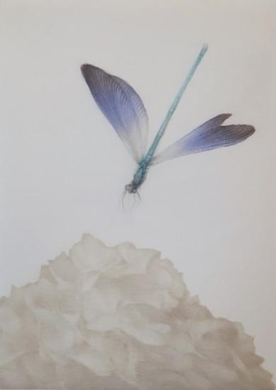 Mikio Watanabe - Demoiselle