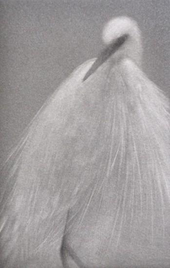 Mikio Watanabe - Feathered Light III