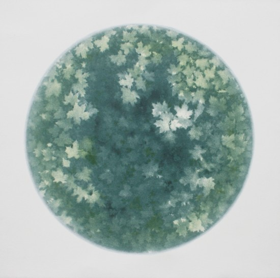 Tomomi Ono - woods - from sky