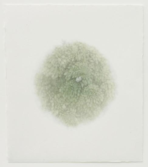 Tomomi Ono - flower I