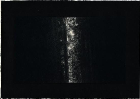 Tomomi Ono - Woods - Into the Light